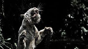 Preview wallpaper white tiger, grin, spray, tiger, predator, big cat