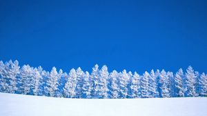 Preview wallpaper winter, blue, white, sky, pure, trees