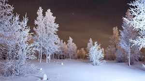 Preview wallpaper winter, forest, snow