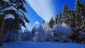 Preview wallpaper winter, forest, snow, sky