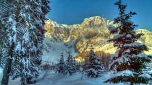 Preview wallpaper winter, mountains, austria, snow, trees, spruce, alps, nature