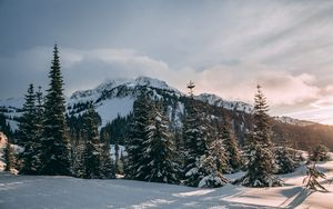 Preview wallpaper winter, mountains, fir trees, snow