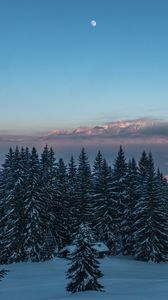 Winter Iphone 8 7 6s 6 For Parallax Wallpapers Hd Desktop Backgrounds 938x1668 Images And Pictures