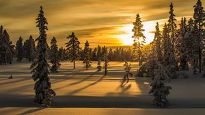 Preview wallpaper winter, snow, fir-tree, trees, sunset