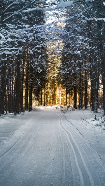 360x640 Wallpaper winter, snow, road, trees