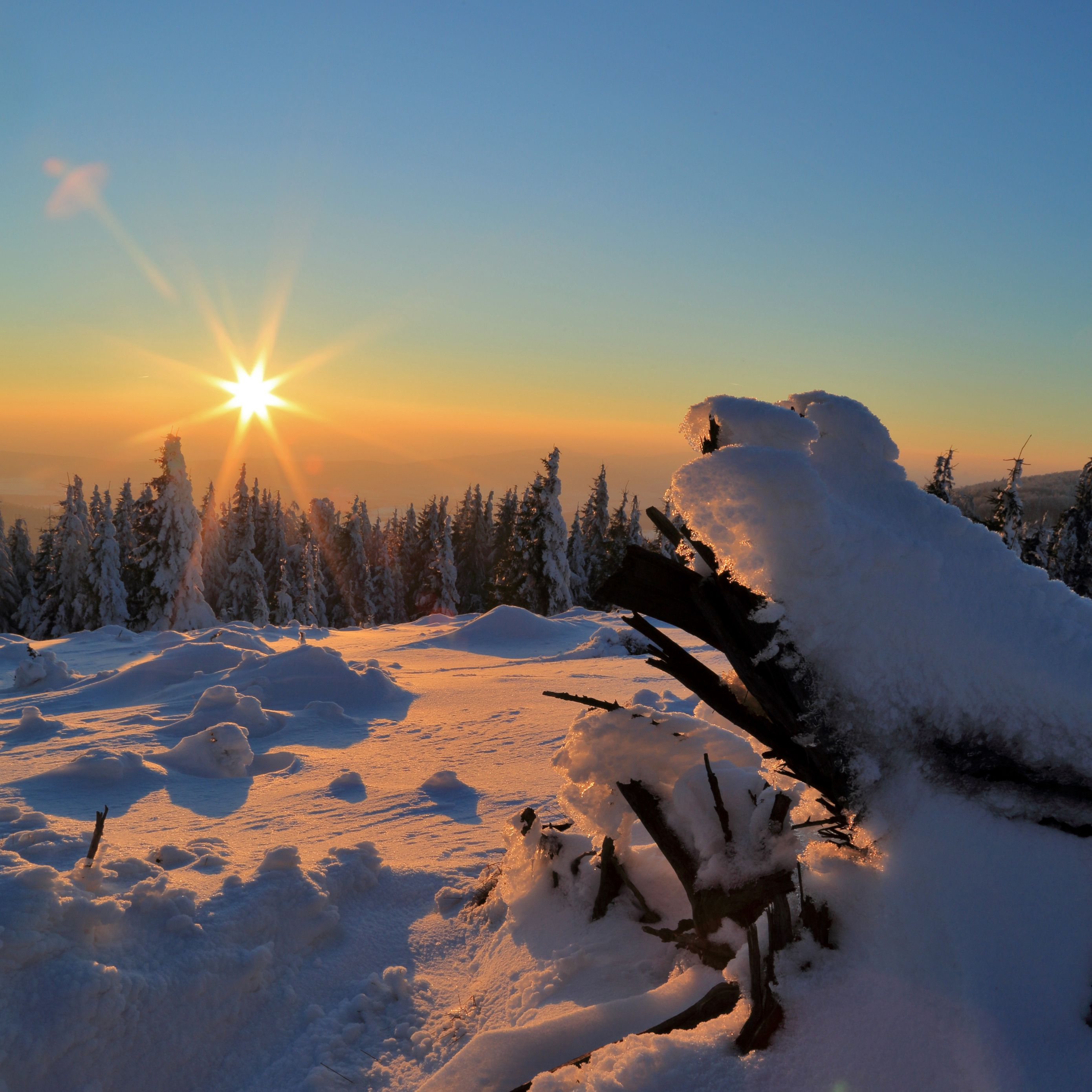 2780x2780 Wallpaper winter, snow, sunset, drifts, trees