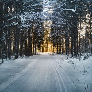 Preview wallpaper winter, trees, forest, road