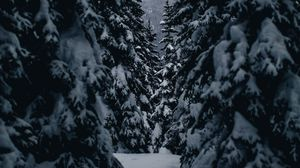 Preview wallpaper winter, trees, passage, snowy