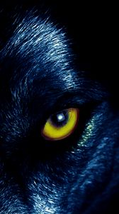 Preview wallpaper wolf, eyes, predator, sight