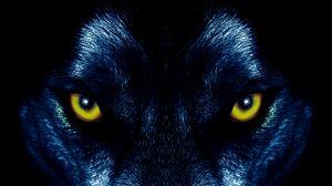 Preview wallpaper wolf, eyes, predator, sight