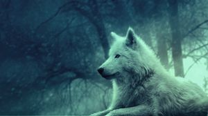 Preview Wallpaper Wolf Light Forest Wild Calm Peace