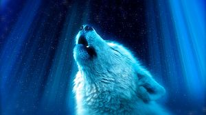 Preview wallpaper wolf, predator, howl, white, blue