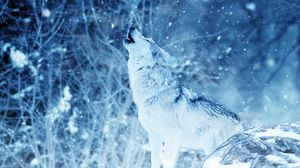 Preview Wallpaper Wolf Predator Howl Photoshop