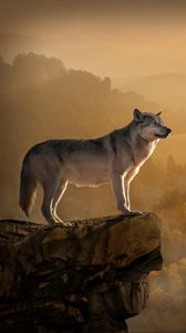 Preview wallpaper wolf, rock, precipice, predator