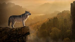 Preview Wallpaper Wolf Rock Precipice Predator