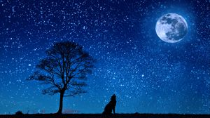 ... Preview wallpaper wolf, starry sky, tree, moon