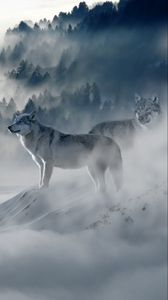 Wolf Iphone 8 7 6s 6 For Parallax Wallpapers Hd Desktop