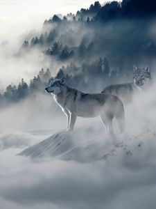 Preview wallpaper wolf, wolves, predators, fog, snow, mountains